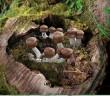 Medicinální houba Agaricus blazei Murrill  si dokáže poradit se zánětem