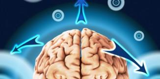 Ganoderma a epilepsie