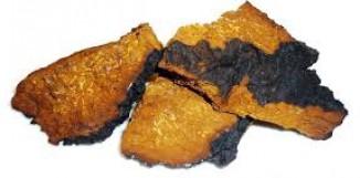 Imunostimulační účinky fenolických látek z Chagy
