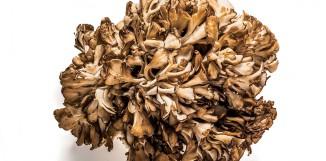 Maitake a jiné houby působí na NK buňky