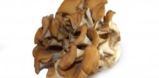 Maitake a myelodysplastický syndrom